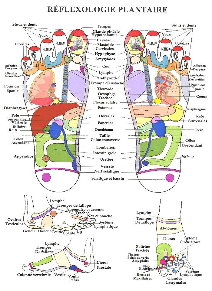 Extrem Réflexologie plantaire, pour soulager la douleur c'est le pied  ZD84