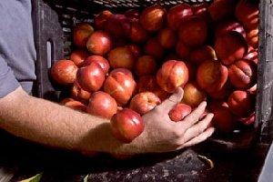 Planter, tailler, traiter ses arbres fruitiers au naturel !