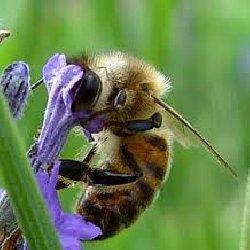 Des abeilles et des hommes, le Film