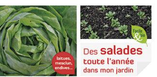 Des salades toute l'année dans mon jardin