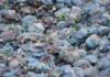 Plastique la pollution insidieuse